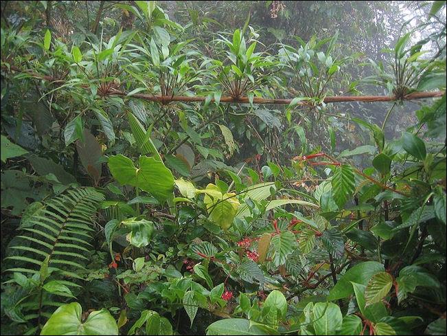 20120601-800px-DirkvdM_cloudforest-jungle.jpg