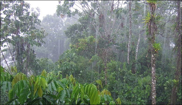 TROPICAL RAINFORESTS—: SOILS, STRUCTURE, CARBON STORAGE AND ...