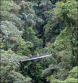 20120601-canopy_level_of_a_rainforest.jpg