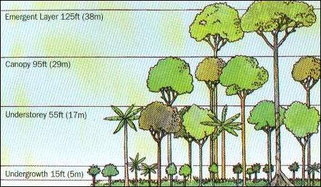 TROPICAL RAINFORESTS—: SOILS, STRUCTURE, CARBON STORAGE AND ...