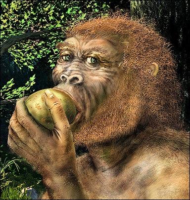 who was australopithecus afarensis diet