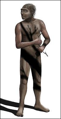 20120202-Homo_erectus_Steveoc_86.jpg