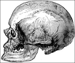 20120205-717px-Cro-Magnon-male-Skulll.png