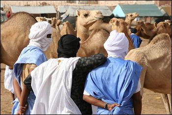 20120210-Nouakchott_camel_market2.jpg