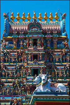 20120502-Cowmeenakshi.jpg