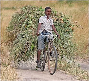 20120514-African_boy_transporting_fodder_by_bicycle_edit.jpg