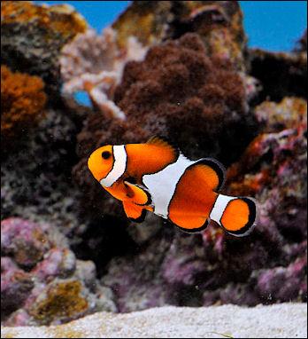 20120517-ClownfishSofia_Zoo.jpg