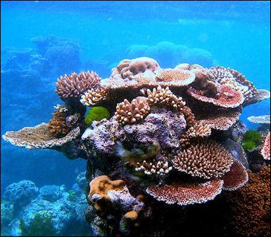 20120517-Coral_Outcrop_Flynn_Reef.jpg