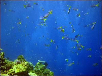 20120517-Reef_Fish-_Flickr_-_NOAA_Photo_Library.jpg