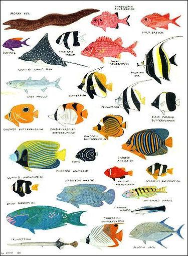 20120517-Reef_Fish5.jpg