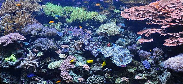 20120517-Seattle_aquarium_tank.JPG