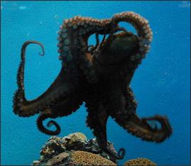 20120518-OctopusVeracruzAq.JPG