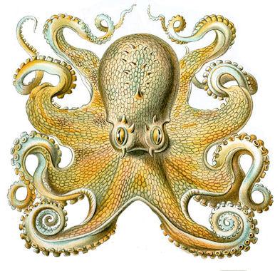 20120518-Octopusvulgaris.jpg