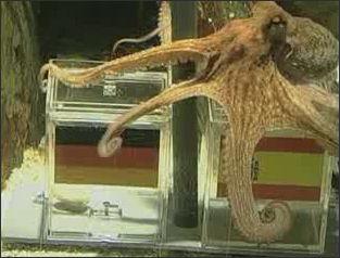 20120518-Paul_the_Octopus_picks_Spain_over_Germany.jpg