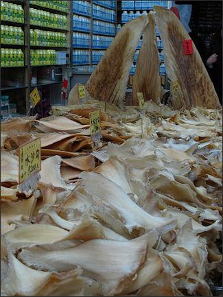20120518-Shark_fins_Taiwan.jpg