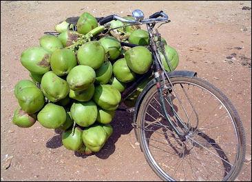 20120525-Coconut_bunch.jpg