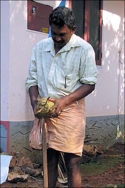 20120525-Coconut_husking.jpg