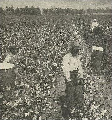 20120529-CottonNegrosSouth.jpg
