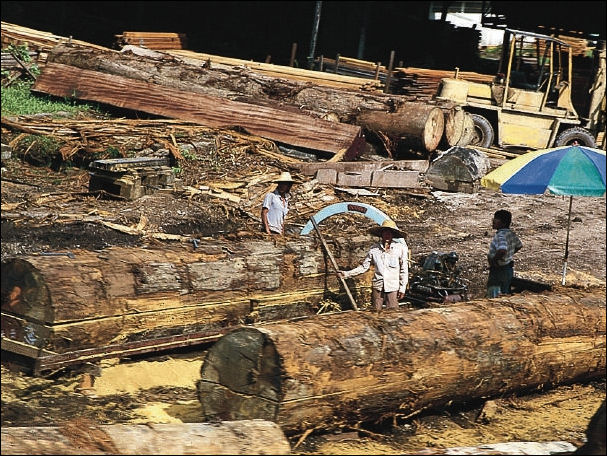 20120531-Forest_logging_in_Malaysia.jpeg