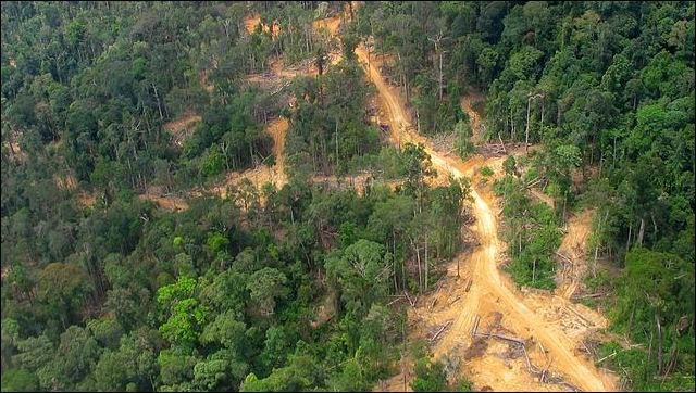 20120531-Logging_road_East_Kalimantan_2005.jpg