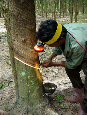 20120531-Tapping_a_rubber_tree_in_Thailand.JPG