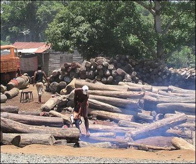 20120531-madagascarIllegal_export_of_rosewood_001.jpg