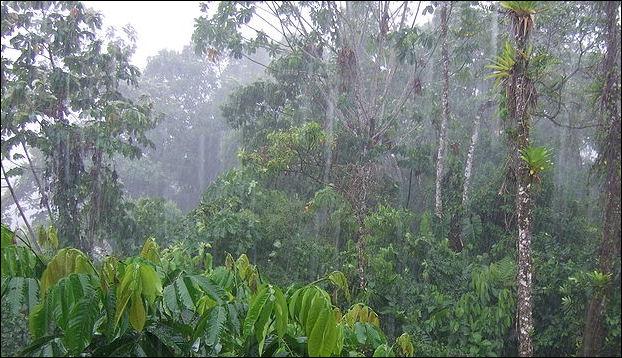 20120601-800px-Rain_in_Tena.jpg