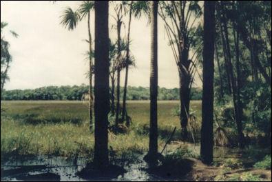 20120601-Amazonia-vegetacao01.jpg