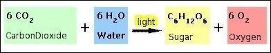 20120601-Photosynthesis.jpg